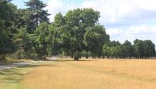 Runners in Bushy Park