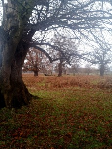 Picture of Bushy Park
