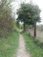Roadside path on Ranmore Road
